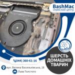 Шерсть тварин та волосся. Чистка MacBook з заміною термопасти у Києві